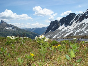 Alpine meadows above the tree line