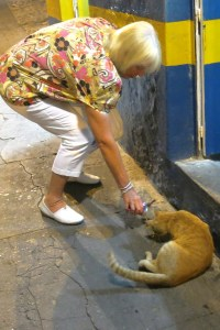 Catsndogs 6