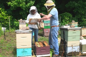 Checking the hive with Adam