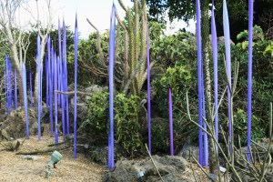 Neodymium Reeds, 2014, by Dale Chihuly, exhibited in the Spiny Forest of Madagascar