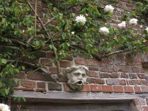 Very early roses climb a garden wall