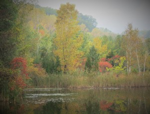 All the colours of autumn reflected in a pond at Toronto's Evergreen Brick Works