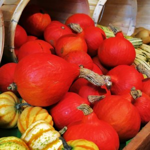 Pumpkins and gourds fight for space at fall markets