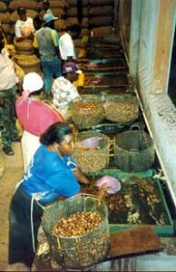 Ladies at work in the nutmeg factory in Grenada