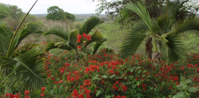 Featured image - tropical foliage along the Rio Guayas