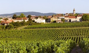 The vineyards of Santenay