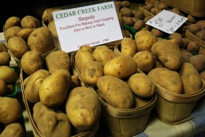 One of nearly 80 varieties of potatoes grown at Cedar Creek Farms