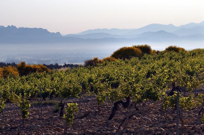 ch9-vineyard