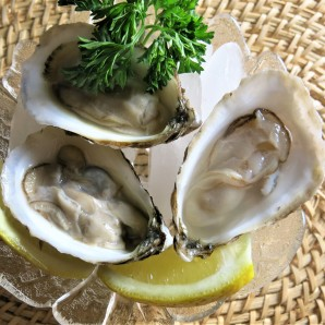 OYSTERS E