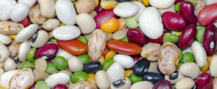 bean-1684304_1920