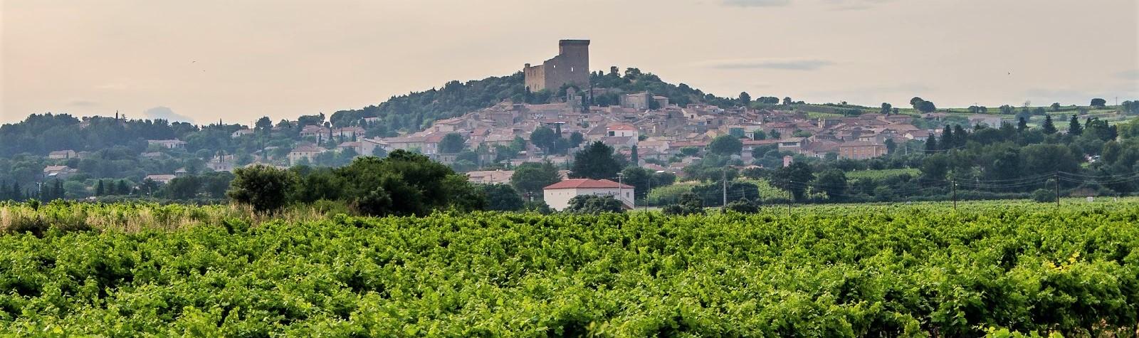 CdP vineyards (2)