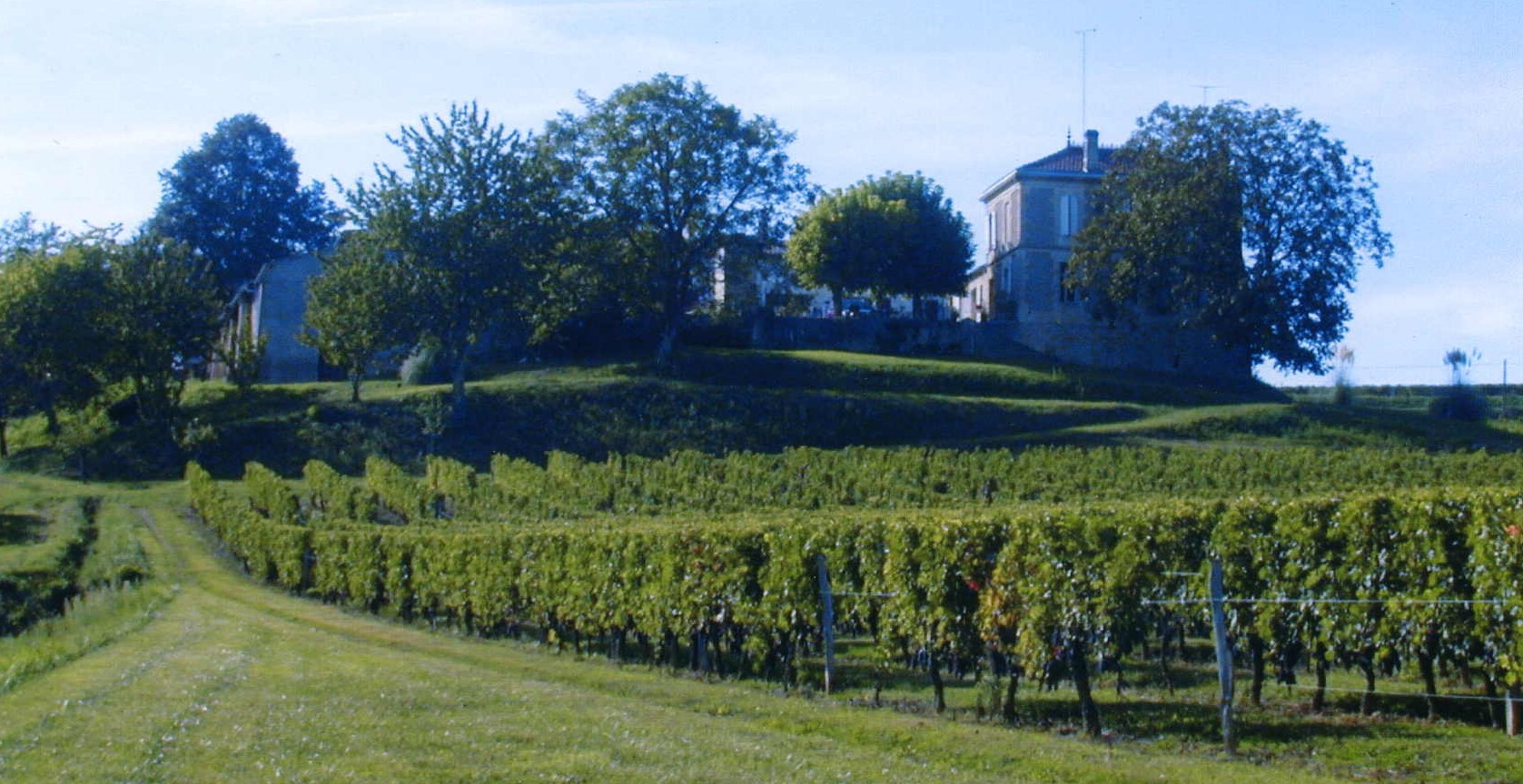 Ch. Robin and vineyard (2) (002)